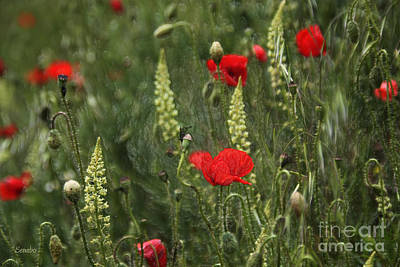 Photograph - Poppies by Eena Bo