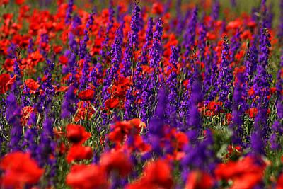 Photograph - Poppy Field by Emanuel Tanjala