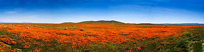 Photograph - Poppy Field Panorama by Joe  Palermo