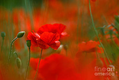 Poppy Flowers 02 Art Print by Nailia Schwarz
