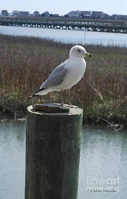 Posing Seagull Art Print