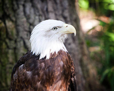 Proud Eagle Art Print by Tammy Smith
