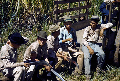 Puerto Rico. Sugar Cane Workers Resting Art Print by Everett