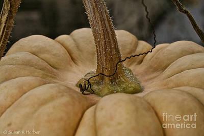 Photograph - Pumpkin Top by Susan Herber