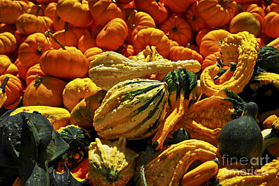Squash Photograph - Pumpkins And Gourds by Elena Elisseeva