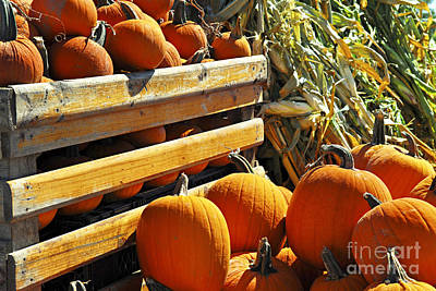 Harvest Photograph - Pumpkins by Elena Elisseeva
