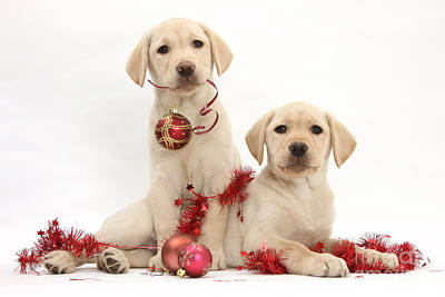 Puppies At Christmas Art Print