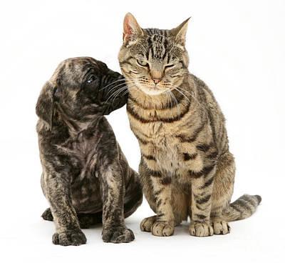 Mastiff Puppies Photograph - Puppy And Cat by Jane Burton