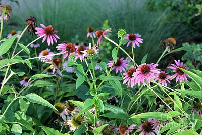Purple Coneflowers Art Print by Theresa Willingham