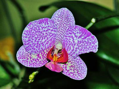 Art Print featuring the photograph Purple Orchid by Sherman Perry