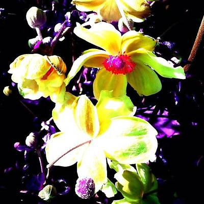 Florals Photograph - Purpleandgold by Inna Jasons