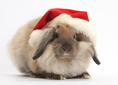 Rabbit Wearing Christmas Hat Art Print