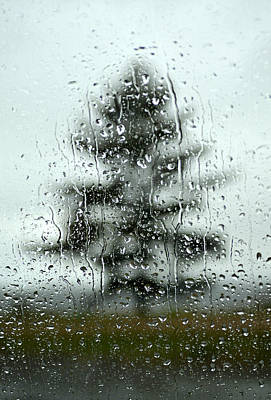 Photograph - Rain Tree by Douglas Pike