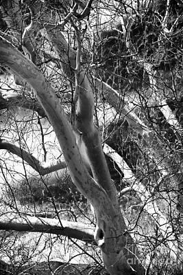 Photograph - Reaching Out by John Rizzuto