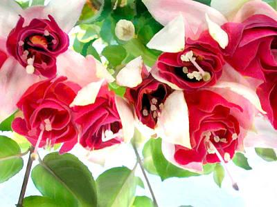 Red And White Fuschias Art Print by Elaine Plesser