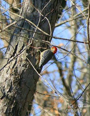 Woodpecker Photograph - Red Bellied Woodpecker by Neal Eslinger