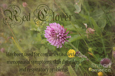 Flower Photograph - Red Clover by Carole Lloyd