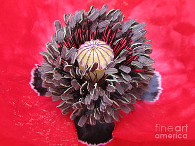 Fauna Photograph - Red Cross by Tina Marie