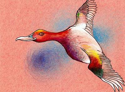 Drawing - Red Duck by Rob M Harper