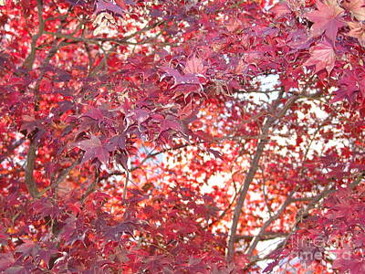Photograph - Red Leaves 1 by Rod Ismay