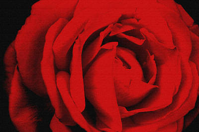 Photograph - Red Rose by Robert Kernodle