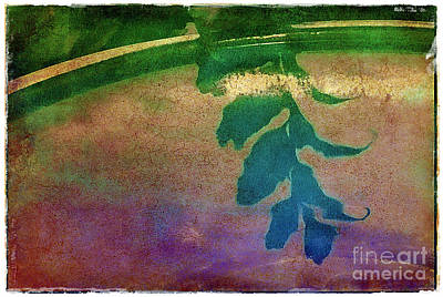 Reflection Art Print by Judi Bagwell