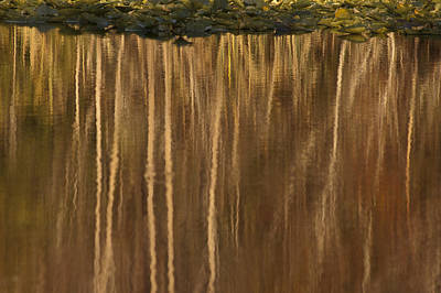 Photograph - Reflection Under Lily Pads by Carolyn Marshall