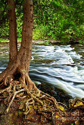 Tree Roots Photograph - River Through Woods by Elena Elisseeva