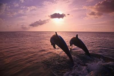 Roatan, Bay Islands, Honduras Two Print by Stuart Westmorland