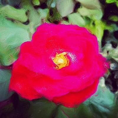 Naturediversity Photograph - Rosa Chinensis #paintings by Jason Fang