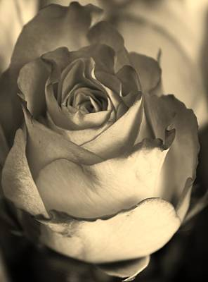 Amature Photograph - Rose In Sepia by Bruce Bley
