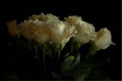 Photograph - Roses by Mario Celzner