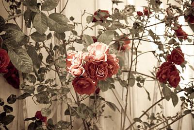 Roses  Print by Robert Hellstrom
