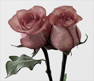 Roses Art Print by Robert Ullmann