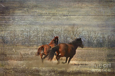 Photograph - Running Free by Debbie Portwood