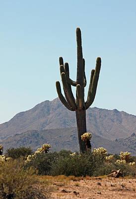 Saguaro Scenic IIi Art Print by Suzanne Gaff