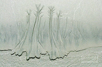 Photograph - Sand Forest by Frank Townsley