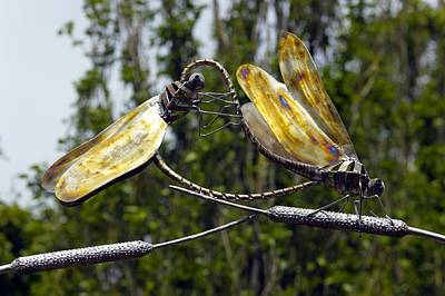Metal Dragonfly Photograph - Sculpture Of Two Dragonflies by Dr Keith Wheeler