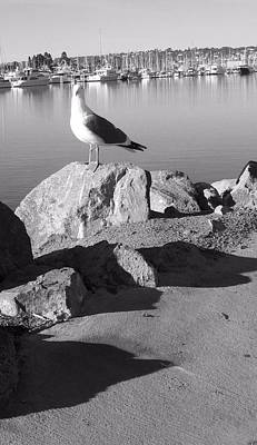 Photograph - Sea Gull by Catherine Kurchinski