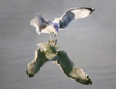 Sea Gull Reflection Art Print by Paulette Thomas