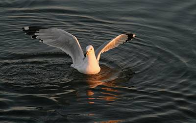 Seagulls At Sunset Art Print by Valia Bradshaw