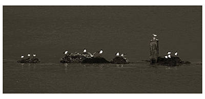 Art Print featuring the photograph Seagulls On Rocks- St Lucia by Chester Williams