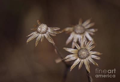 Photograph - Season's End by David Waldrop
