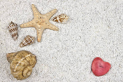 Seastar And Shells Art Print by Joana Kruse