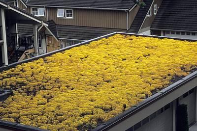 Sedum Green Roof Art Print by Alan Sirulnikoff