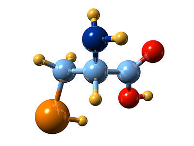 Selenocysteine, Molecular Model Art Print by Dr Mark J. Winter