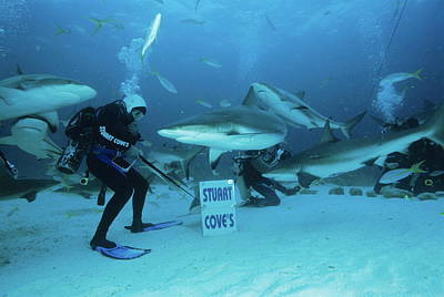Frenzy Photograph - Shark Feeding by Alexis Rosenfeld