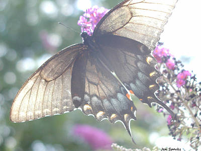 Photograph - Sheer Butterfly by Jen Sparks