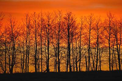 Silhouette Of Trees Against Sunset Art Print