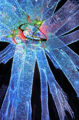 Silk Moth Caterpillar Breathing Pore Art Print by Dr Keith Wheeler